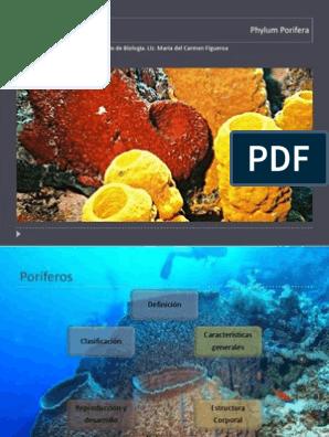 Poriferos Esponja Zoología