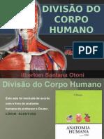 3. Divisão Do Corpo Humano(1)