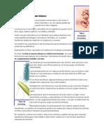 BACTERIAS.docx