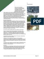 Casuarina_equisetifolia.PDF
