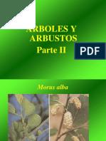 Arboles y Arbustosparte II
