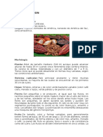 Botanica Del Cacao