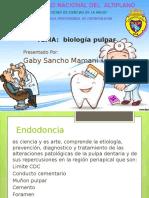 biologia pulpar