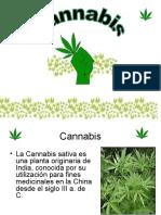 Marihuana Jc