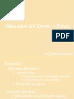 Musculos Torax 2015