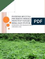 Potensi Mucuna Pruriens Sebagai Penutup Tanah Lahan Bera