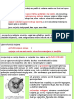 anatomija 17.ppt