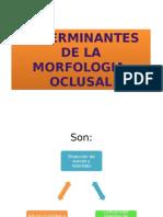 MORFOLOGIA OCLUSAL