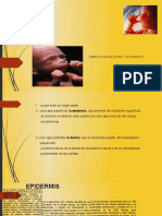 ASIGNATURA Embriologia Piel y Anexos