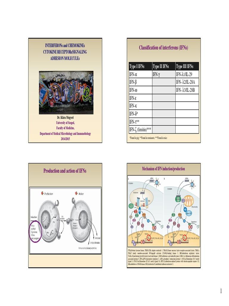 Condyloma immunglobulin Immunglobulin és paraziták, User Top Links