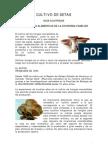 Botanica - Agricultura - Cultivo de Setas - Pleourotus