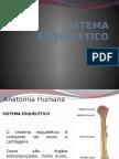 AULA 2 - ANAT. HISTÓRIA - Copia (1).pptx