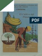 El Cultivo Del Plátano