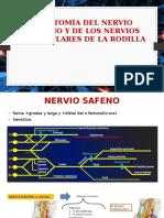 Anatomia Nervio Safeno y Geniculares Rodilla