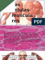 Celula Muscular Corregbhjcgfhfhjida
