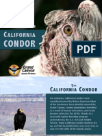 The Life of the California Condor