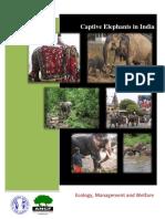 Captive Elephants in India