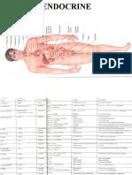 Endocrine.ppt1