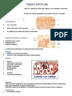 anatomia tejidos
