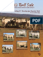 Dennis January 2016 Bull Sale Catalog