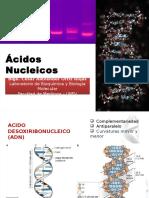 Clase - ADN Y ARN