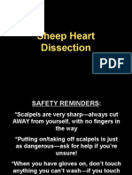 exercise 30 sheep heart dissection