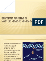 Prezentare Electroforeza Luca Pantea