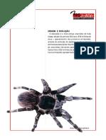 Aracnideos - Origem e Evolocao