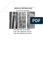 Muscle Physiology Review 2015