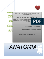 El Corazon Anatomia