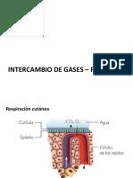 Intercambio de Gases Circulacic3b3n r Animal