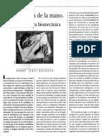 la liberación de la mano, una perspectiva biomecánica