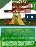 ESCOLAS - Dia Da Floresta