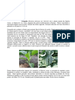 culturi legume.doc