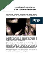 Identifican Cómo El Organismo Elimina a Las Células Defectuosas