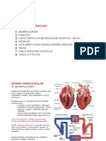APUNTES Cardiovascular