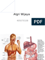 Algri Wijaya