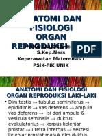 2. Anat-Fisiol Reprod. Pria