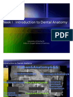 IPT Intro to Dental Anatomy tooth dental dentistry