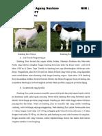 deskripsi bangsa kambing dan domba.docx