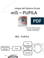 Iris - Pupila