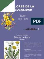 Flores de La Localidad
