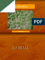 La_Hoja