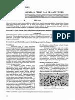 j. Bakteri Salmonella Typhi Dandemamtifoid