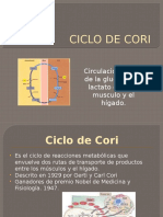 Exp. Ciclo de Cori