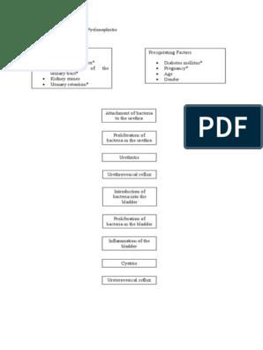 pathophysiology pyelonephritis urinary tract infection  diagram of pyelonephritis #13