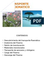 TRANSPORTE FLOEMATICO.ppt