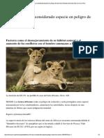 León Africano Especie en Extincion