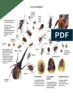 Los Escarabajos