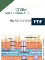 Estructura Microbiana II[1]